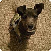Adopt A Pet :: Tix - Rancho Cucamonga, CA