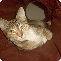 Adopt A Pet :: EVIE - Medford, WI