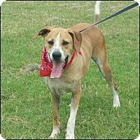 Adopt A Pet :: Ramsey - Shreveport, LA