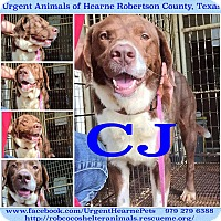 Adopt A Pet :: CJ - Hearne, TX