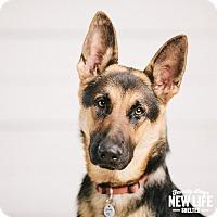 Adopt A Pet :: Jinx - Portland, OR