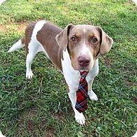 Adopt A Pet :: SONNY - Lexington, NC