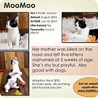 Adopt A Pet :: Moo Moo - Mount Gilead, OH
