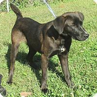 Adopt A Pet :: Spud - Reeds Spring, MO
