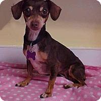Adopt A Pet :: Darby - 8 lbs - Dahlgren, VA