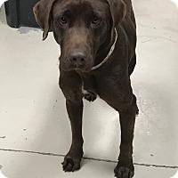 Adopt A Pet :: Harper - Decatur, AL