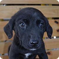 Adopt A Pet :: Lewie - Mechanicsburg, PA