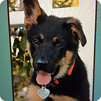 Adopt A Pet :: FRITZVON FURSTEINSTEIN - Los Angeles, CA