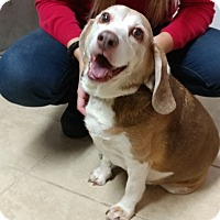 Adopt A Pet :: Snoopy - Sparta, NJ