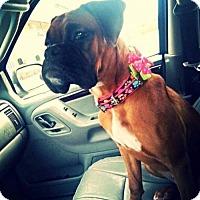 Adopt A Pet :: TBD - Wilmington, NC
