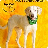 Adopt A Pet :: Mr. Peanut Butter - Topeka, KS