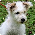 Adopt A Pet :: Monica