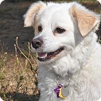 Adopt A Pet :: Finn - Tumwater, WA