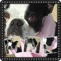 Adopt A Pet :: Dixie Elle - various cities, FL