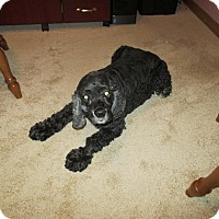Adopt A Pet :: Trevor 10yr Adopted - Mentor, OH
