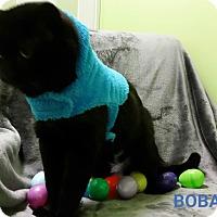 Adopt A Pet :: Boba Fett - Muskegon, MI