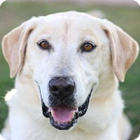 Adopt A Pet :: JAKE - Kyle, TX