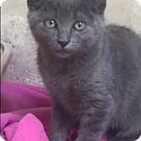 Adopt A Pet :: Molly - Orange, CA
