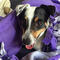 Adopt A Pet :: Sparky - Arlington, VA