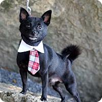 Adopt A Pet :: Danny - Dalton, GA