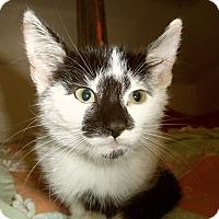 Adopt A Pet :: JAXSON - Medford, WI