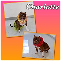 Adopt A Pet :: Charlotte-Pawsitive Direction - Loxahatchee, FL