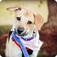 Adopt A Pet :: Aurora - Westminster, MD