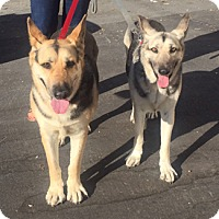 Adopt A Pet :: ZIVA and CALI - Pt. Richmond, CA