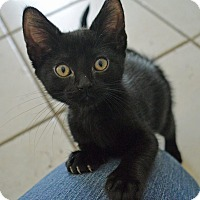 Adopt A Pet :: Dinky - Middletown, NY