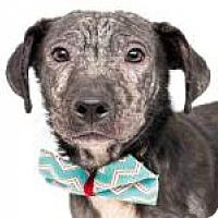 Adopt A Pet :: Storm**On Hold** - New Smyrna Beach, FL