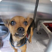 Adopt A Pet :: Buddy - Newton, KS
