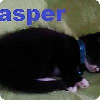Adopt A Pet :: Jasper - Flint, MI