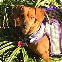 Adopt A Pet :: Adoption pending - Mimi2 - Orangeburg, SC