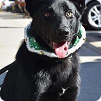 Adopt A Pet :: Sully - Greensboro, NC