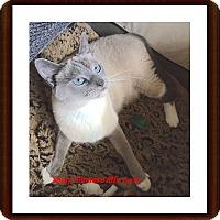 Adopt A Pet :: Sassy - Brandon, FL