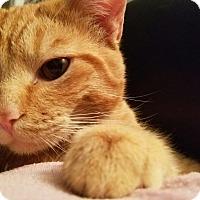 Adopt A Pet :: Leo - Manhattan, KS