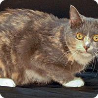 Adopt A Pet :: Sweet Dew - Newland, NC