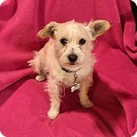 Adopt A Pet :: Shanti - Tijeras, NM