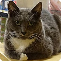Adopt A Pet :: TINKER - Diamond Bar, CA
