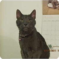 Adopt A Pet :: Greyson - Los Angeles, CA