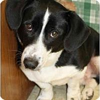 Adopt A Pet :: Burt - Racine, WI