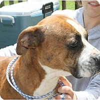 Adopt A Pet :: Diamond - ARDEN, NC