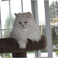 Adopt A Pet :: Kieran - Catasauqua, PA