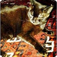Adopt A Pet :: Kali - Alexandria, VA