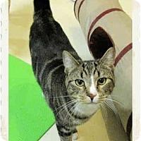 Adopt A Pet :: Nyles - Catasauqua, PA