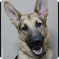 Adopt A Pet :: Romulus - Rockwall, TX