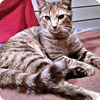 Adopt A Pet :: Sally2 - Rocky Hill, CT