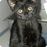 Adopt A Pet :: Muffin - Waupaca, WI