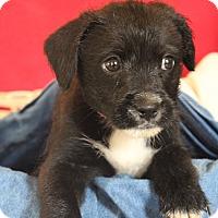 Adopt A Pet :: Cedar - Waldorf, MD