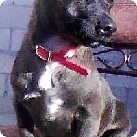 Adopt A Pet :: Romeo - Boulder, CO